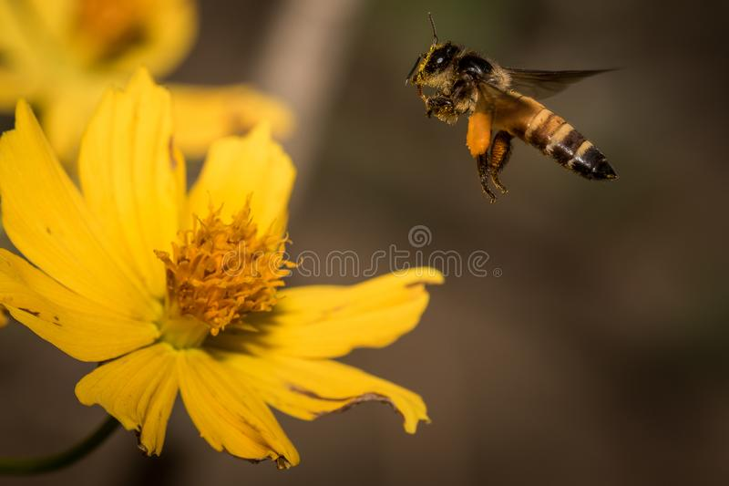 Bee with flowers stock image