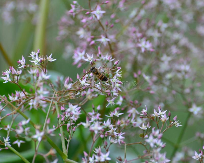 Bee on flowers stock image image of yard outdoors foliage 51012987 download bee on flowers stock image image of yard outdoors foliage 51012987 mightylinksfo