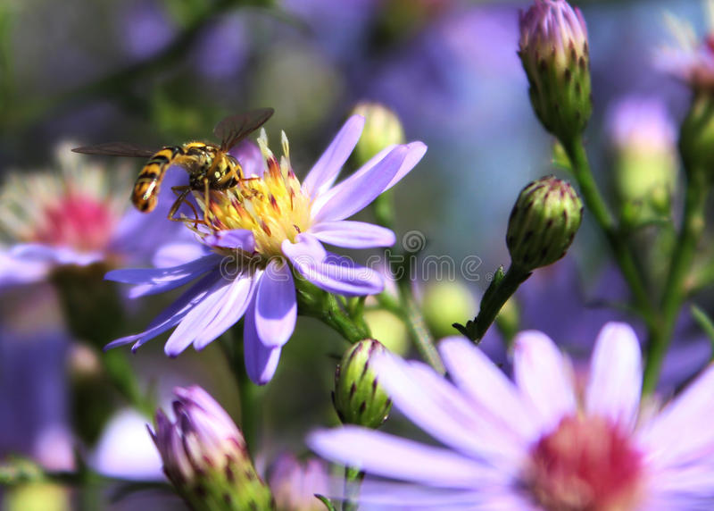 Bee and flowers stock image