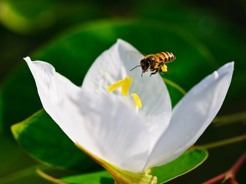Download Bee flying stock image. Image of close, colorful, plants - 15751625