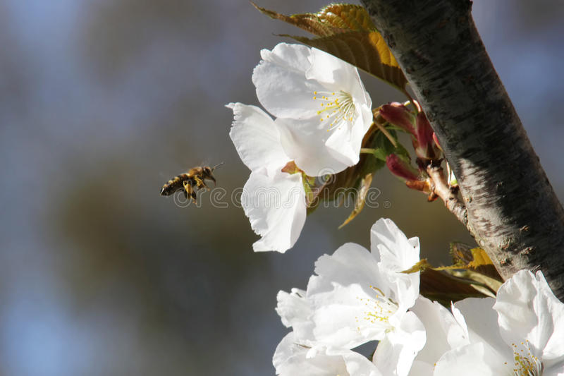 Download Bee stock photo. Image of background, ingredients, beautiful - 41559988