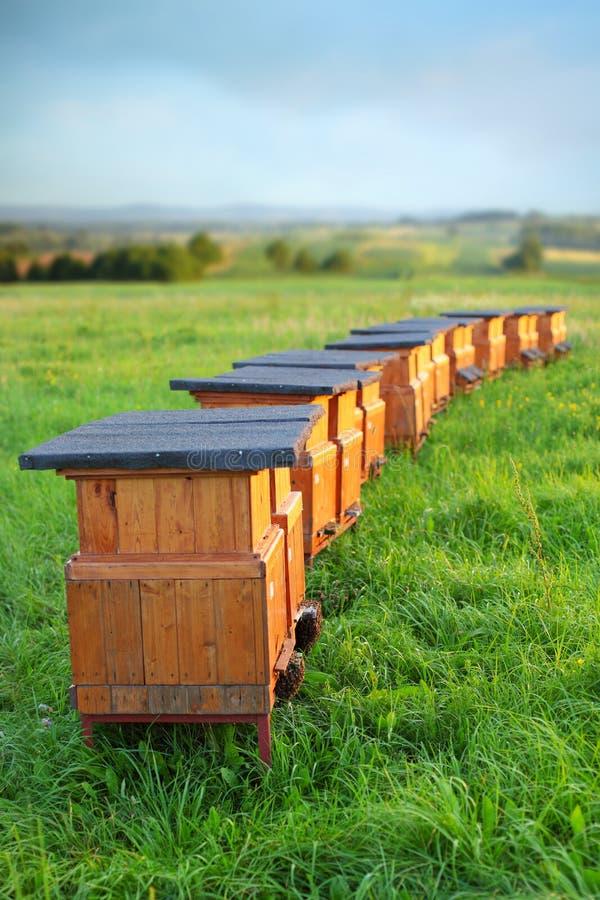 Bee-garden stock images
