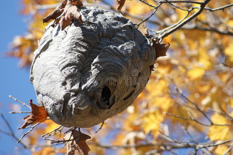 Bee Hive royalty free stock images