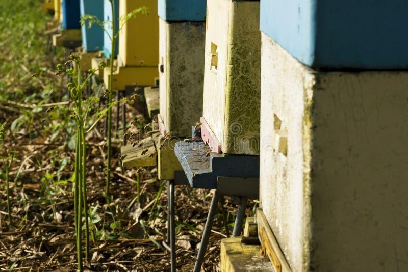 Download Bee hive stock photo. Image of animal, macro, product - 24778520