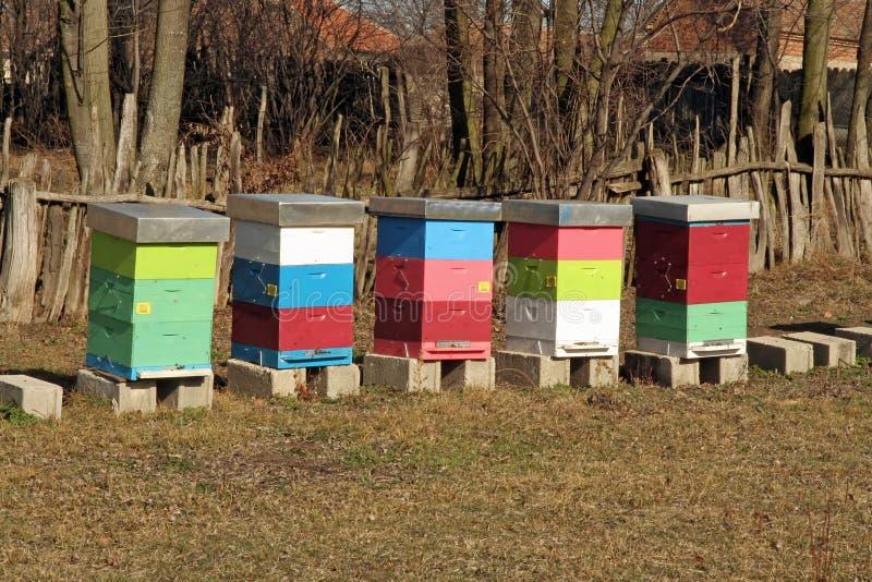 Download Bee Hive stock photo. Image of apiarist, beekeeper, macro - 38075874