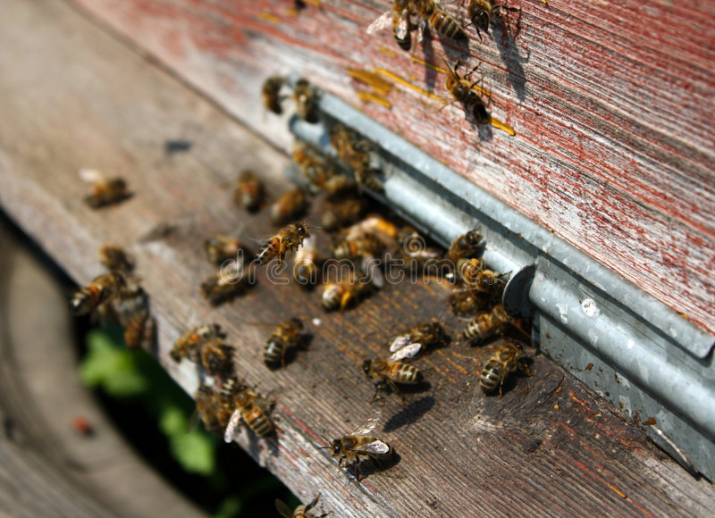 Download Bee hive stock image. Image of nutrition, interesting - 9293587