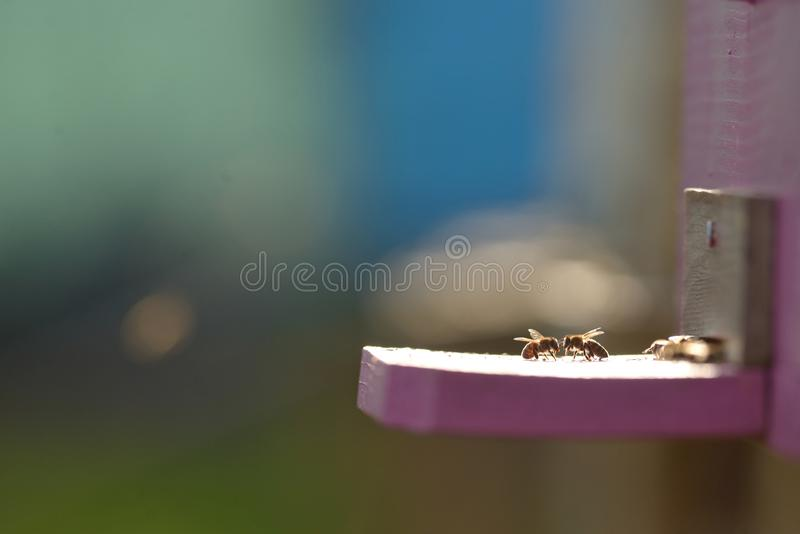 Bee hive with bees. On it royalty free stock photography