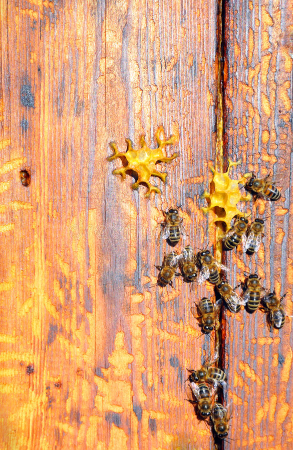 Bee hive with bees on it. For your design royalty free stock photos