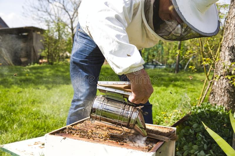 A bee hive box being smoked to calm the worker bees and allowing a beekeeper to inspect the hive for parasites stock photo