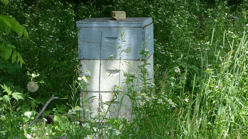 Bee Hive from a Distance. This bee hive is busy with activity out in the middle of nowhere during the Summer stock photography