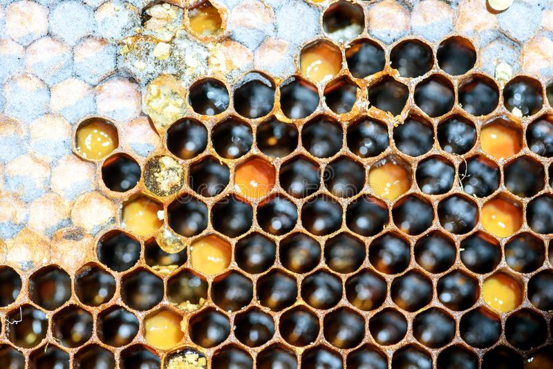 Bee Hive Hexagon Honeycomb Pattern and Honey. Closeup macro of yellow bee honeycomb in a hexagon pattern with sealed golden sweet honey compartments of the hive stock photography