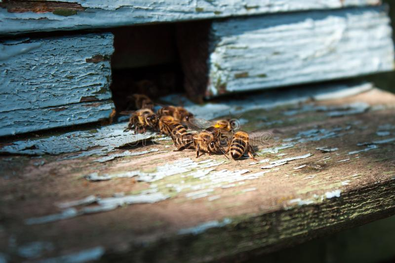 Bee hive with honey bees royalty free stock photo