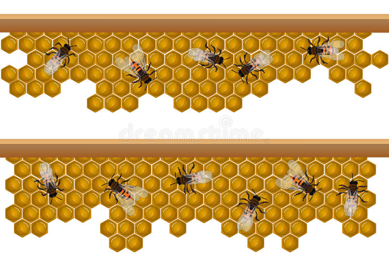 Bee hive pattern royalty free illustration