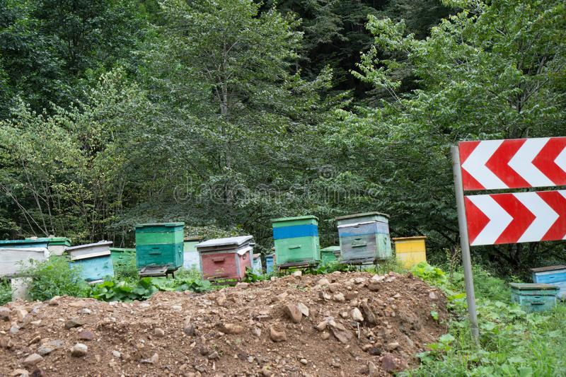 A cluster of beehives sit among trees. The wooden colorful boxes are painted bright colors. Wooden multi-colored beehives for bees. Bee hive in the summer stock photos