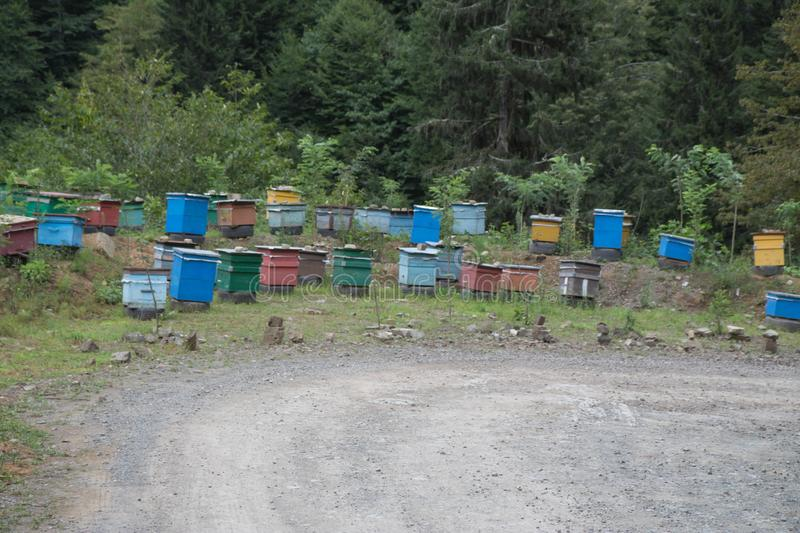 A cluster of beehives sit among trees. The wooden colorful boxes are painted bright colors. Wooden multi-colored beehives for bees. Bee hive in the summer royalty free stock images