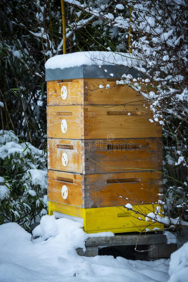 Bee hive in winter stock image