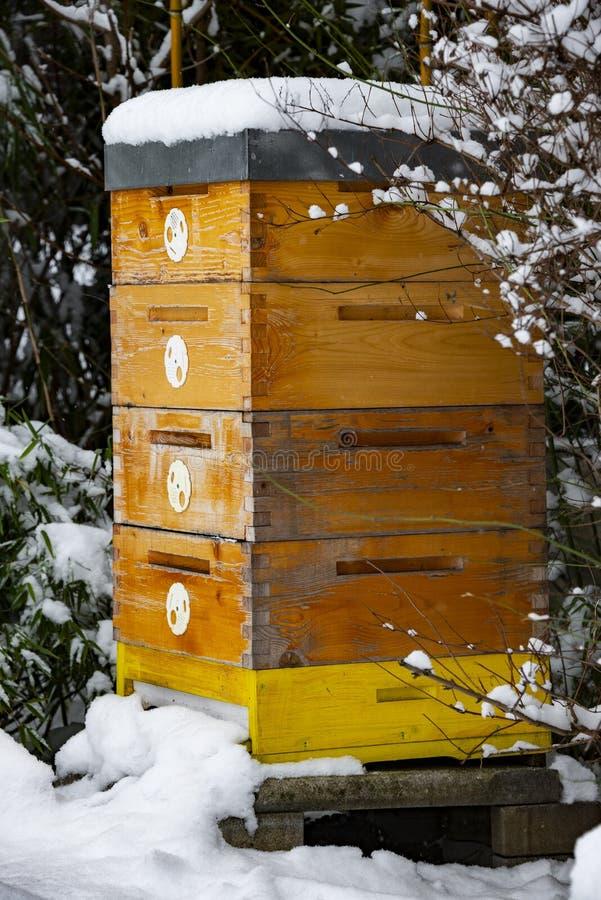 Bee hive in winter. Bee breeding Apis mellifera close up stock image