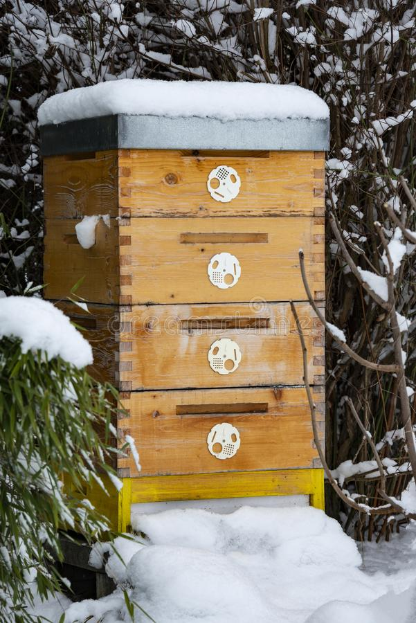 Bee hive in winter. Bee breeding Apis mellifera close up royalty free stock images