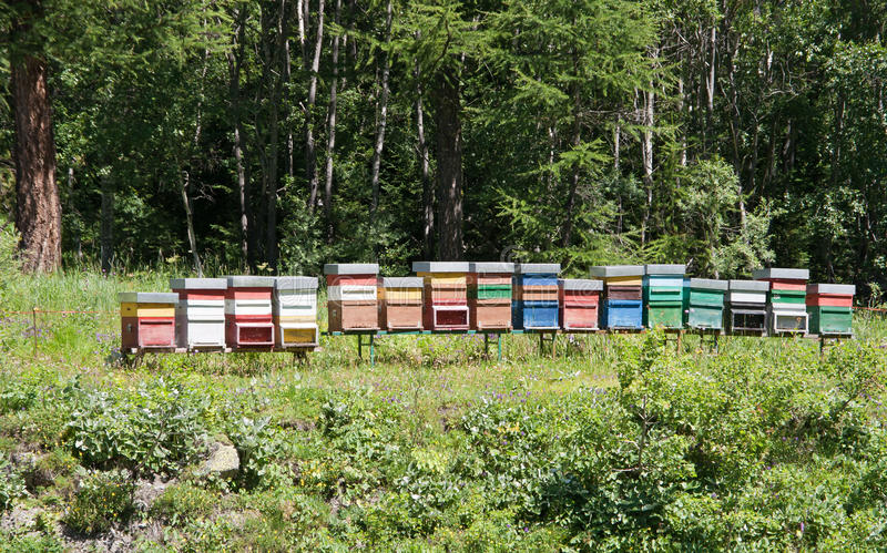 Download Bee hives stock photo. Image of countryside, tree, hive - 16032836