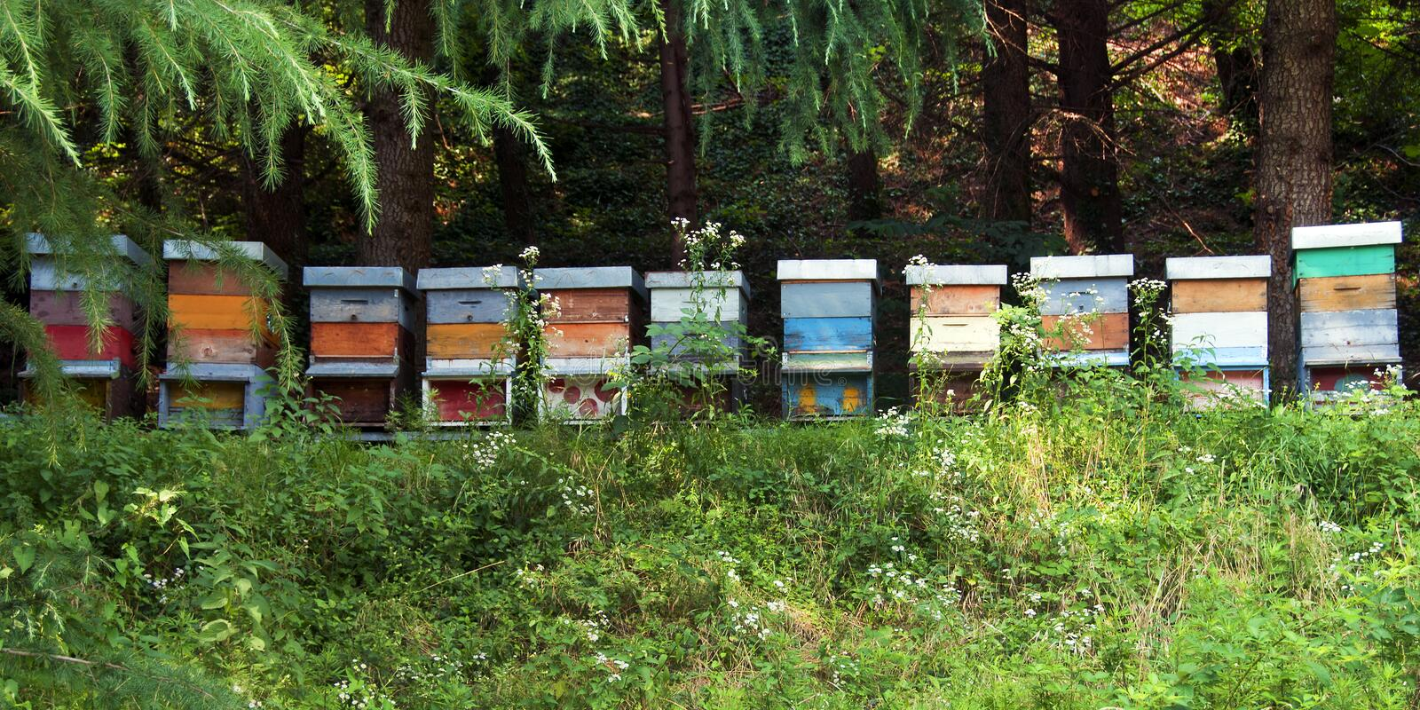 Bee hives. Colored bee hives in the woods royalty free stock photos