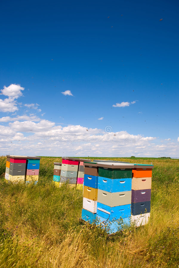 Bee hives. Colorful bee hives with bees swarming in the blue sky royalty free stock image