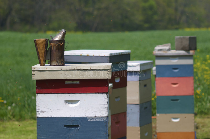 Bee hives. In green meadow with smoker stock photos