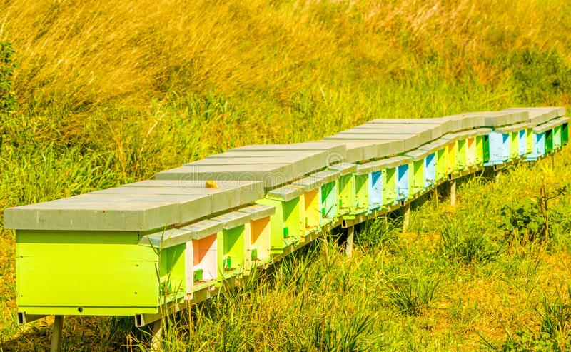 Bee Hives. A collection of colourful bee hives, active with bees collecting honey, in the outbacks of Sicily, Italy stock photo