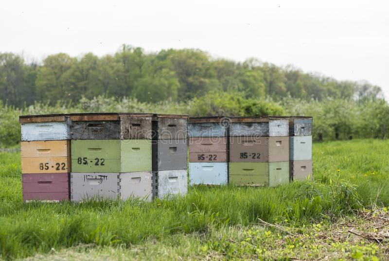 Bee hives. In the country side stock image