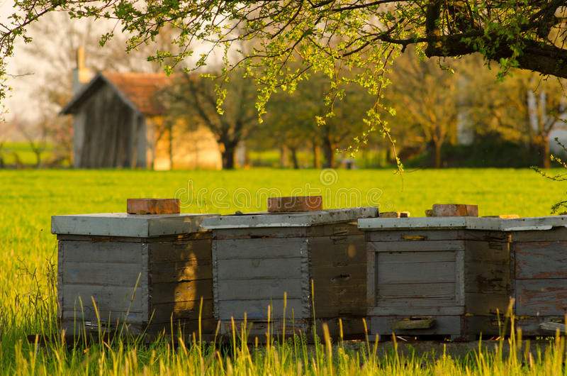 Bee hives on countryside. Bee hives outdoor on sunny spring day stock image