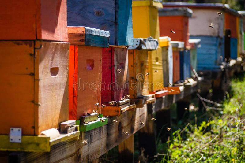 Bee hives of different colors. On a sunny day stock image