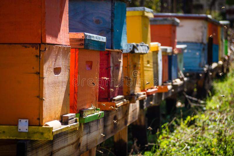 Bee hives of different colors. On a sunny day royalty free stock photo