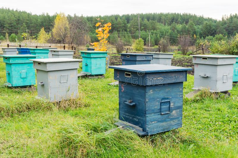 Bee hives in the field. Agricultural landscape - Bee hives in the field stock image