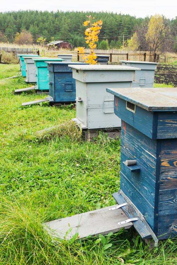 Bee hives in the field. Agricultural landscape - Bee hives in the field stock images