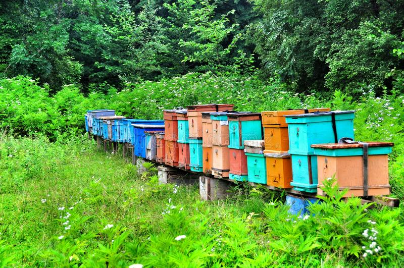 Bee hives in a forest farm Guamka stock photos