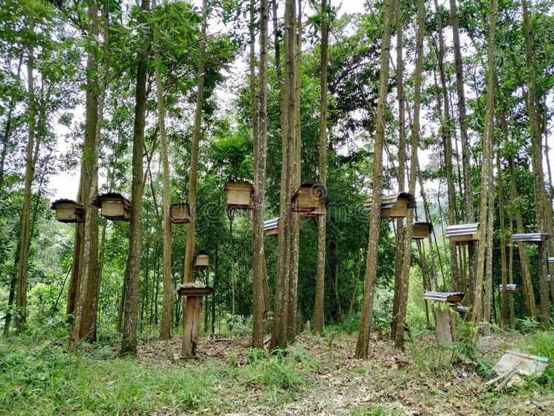 Bee hives in forest stock photography