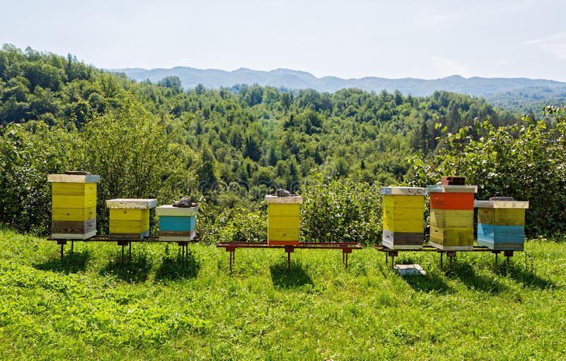 Bee hives in the forest. Wooden beehives in the forests of Montenegro royalty free stock photo