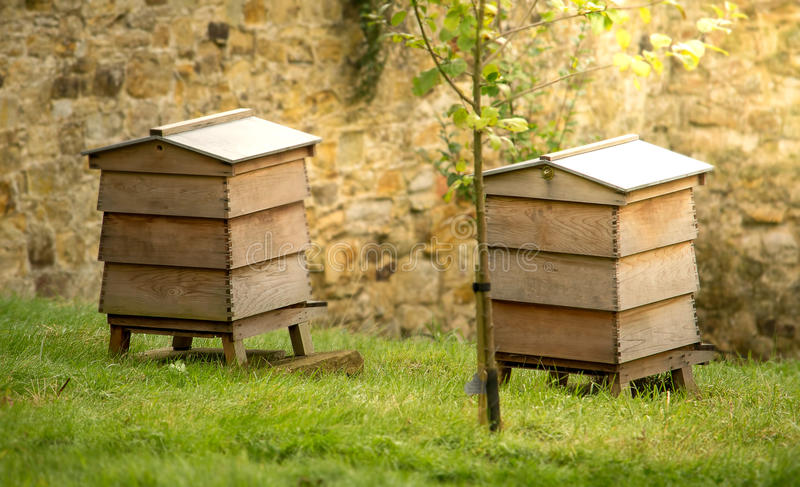 Bee hives in garden stock photo
