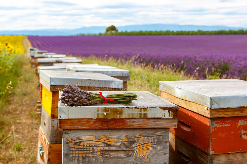 Bee hives on lavender fields, near Valensole, Provence. royalty free stock images