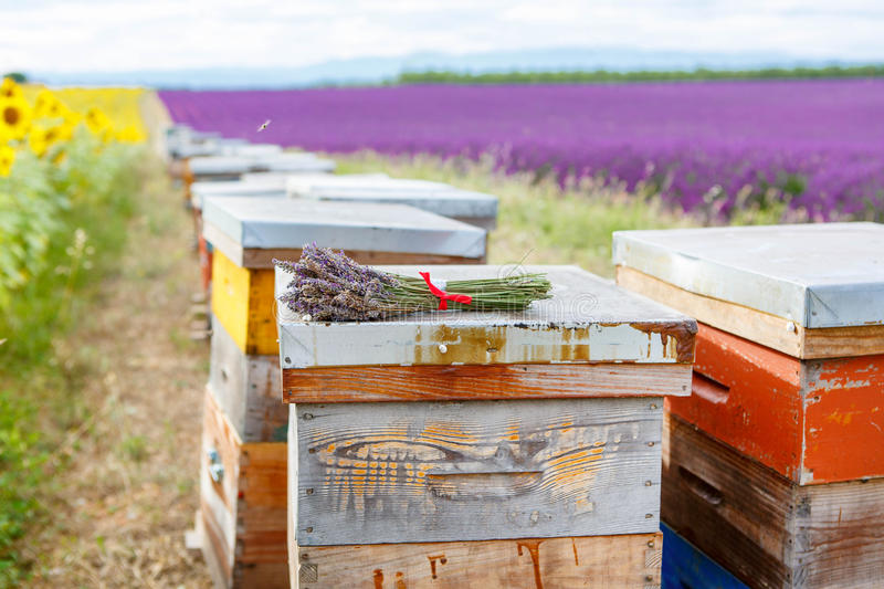 Bee hives on lavender fields, near Valensole, Provence. stock image