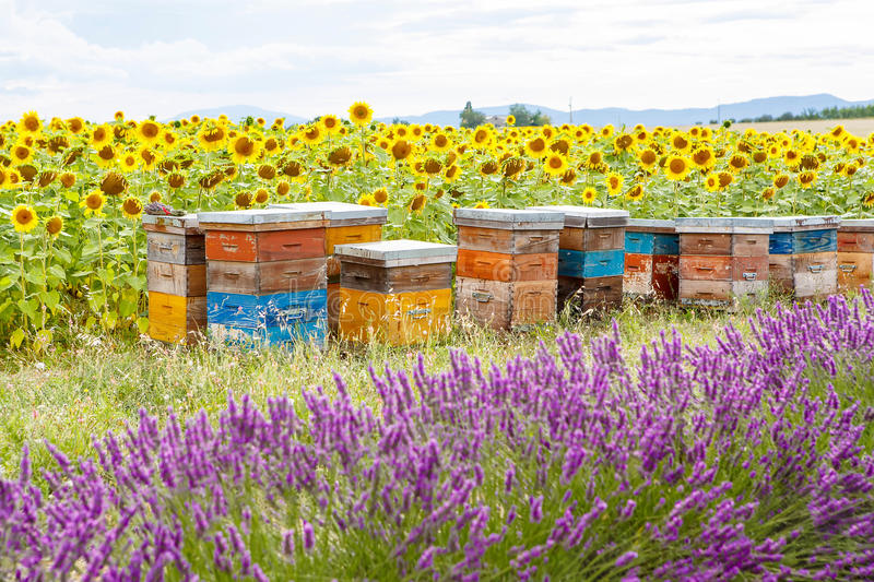 Bee hives on lavender fields, near Valensole, Provence. royalty free stock photography