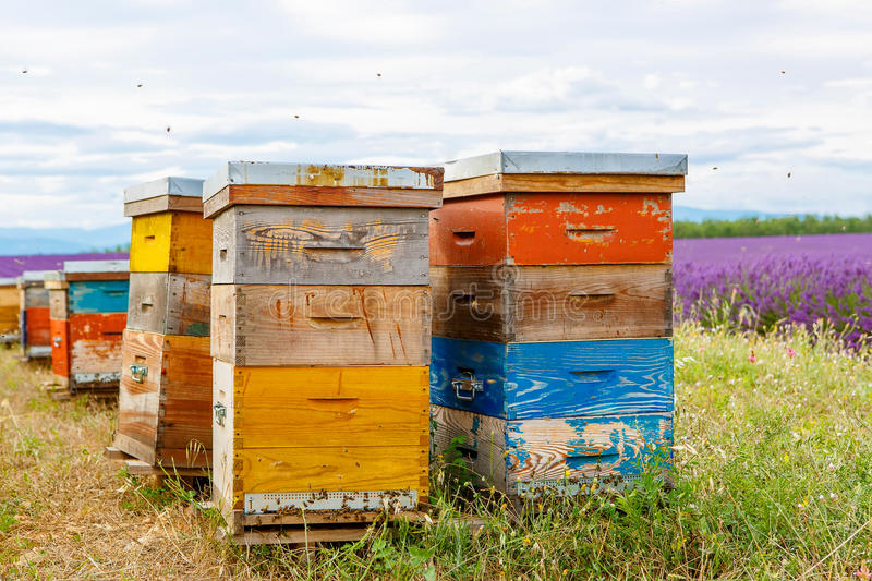 Bee hives on lavender fields, near Valensole, Provence. Bee hives on lavender and sunflower fields, near Valensole, Provence. France. Famous, popular royalty free stock photos
