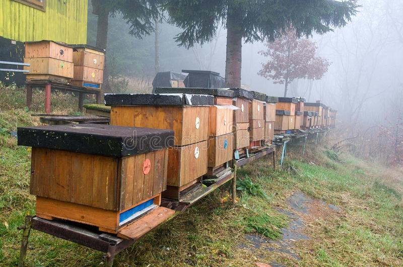 Bee hives. A long line of wood bee hives at the beginning of autumn stock image