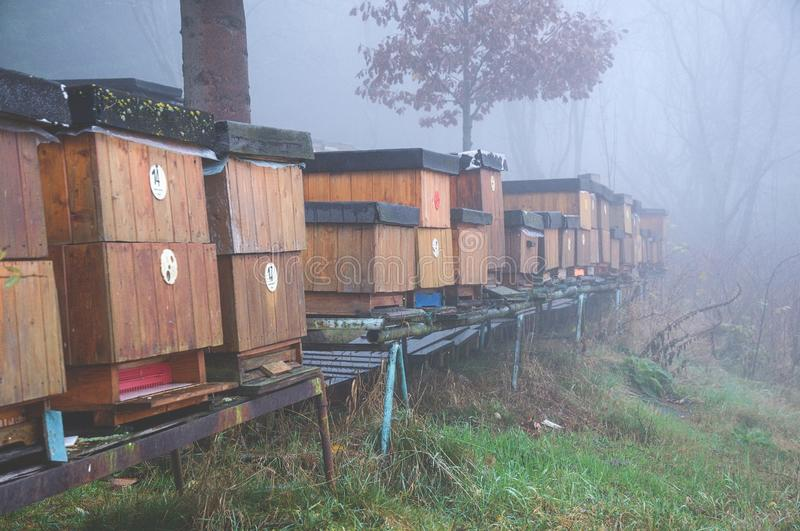 Bee hives. A long line of wood bee hives at the beginning of autumn stock photo