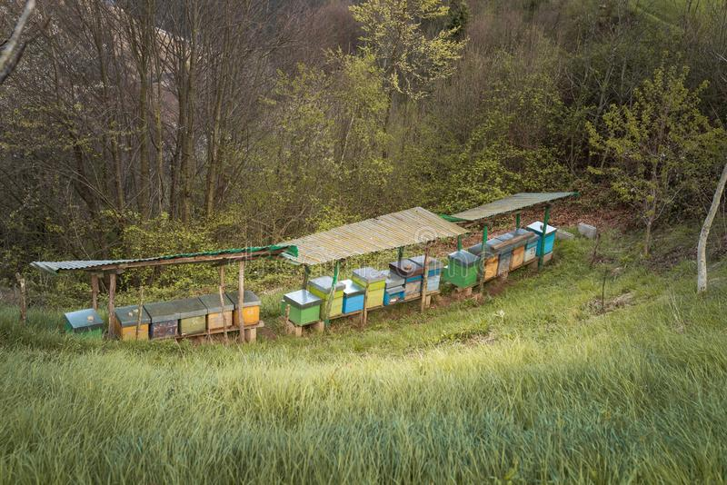 Bee hives on meadow. In countryside of Italy,BergamoSeriana valley}The houses of the bees are placed on the green grass in the mountains. Private enterprise for royalty free stock image