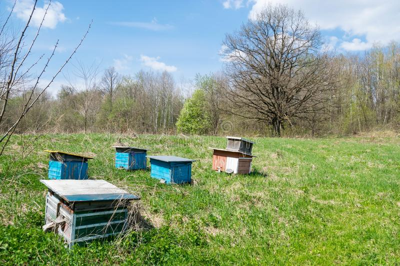 Bee hives in a meadow by the forest. Dried dead tree in the background royalty free stock photography