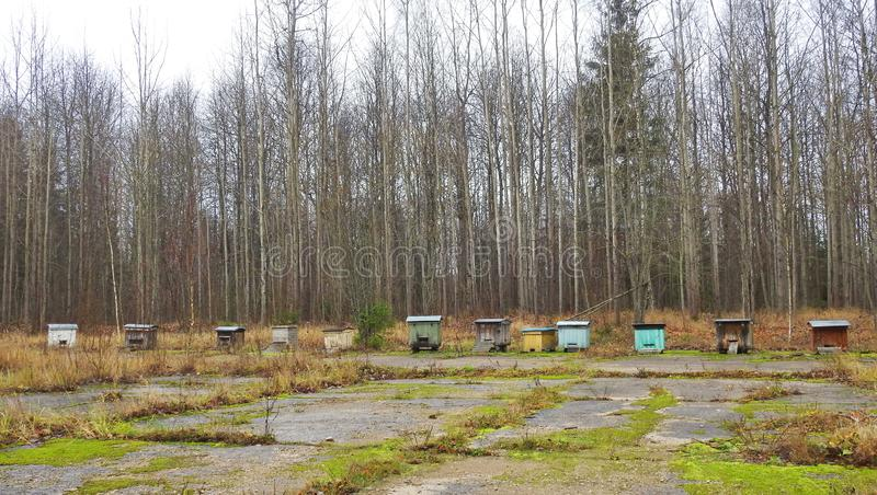 Bee hives near forest, Lithuania stock photography