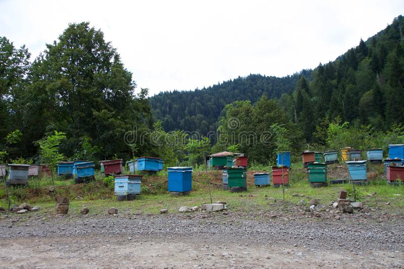 Bee hives near the forest in the mountains. Row of colorful wooden beehives stock photography