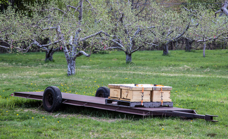 Download Bee hives in an orchard stock photo. Image of pollinate - 30876032