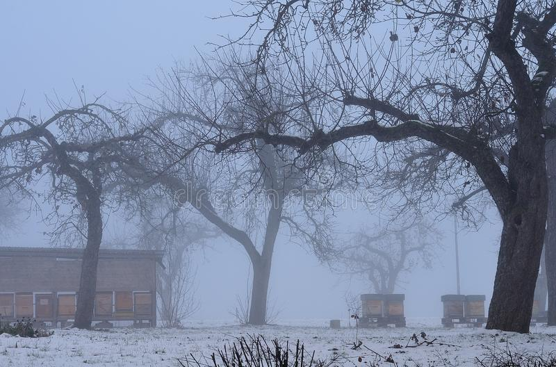 Bee hives in orchard on foggy winter morning stock image