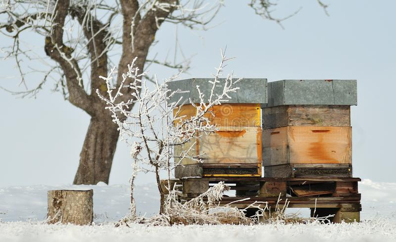Bee hives in snowy orchard. Wooden boxes for bees in snow covered orchard on sunny winter day stock images